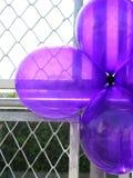 Πορφυρά μπαλόνια κομμάτων Στοκ Φωτογραφίες