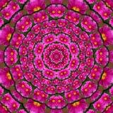 Πορφυρά λουλούδια καλειδοσκόπιων Στοκ φωτογραφίες με δικαίωμα ελεύθερης χρήσης