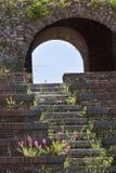 Πορφυρά λουλούδια στα σκαλοπάτια του ρωμαϊκού θεάτρου στο Μπενεβέντο Στοκ φωτογραφία με δικαίωμα ελεύθερης χρήσης