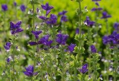 Πορφυρά λουλούδια στους βοτανικούς κήπους της Νέας Υόρκης Στοκ Εικόνα