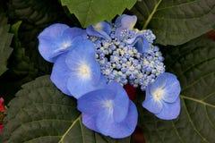 Πορφυρά λουλούδια στο βοτανικό κήπο Στοκ Εικόνες