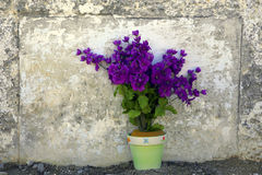 Πορφυρά λουλούδια στο δοχείο από τον εκλεκτής ποιότητας τοίχο Στοκ φωτογραφία με δικαίωμα ελεύθερης χρήσης