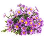 Πορφυρά λουλούδια φθινοπώρου ανθοδεσμών Στοκ Φωτογραφίες