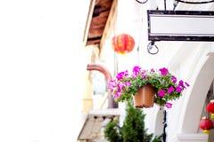 Πορφυρά λουλούδια flowerpot και Sino-Portuguese ύφος σπιτιών σε Phuket Ταϊλάνδη Στοκ Φωτογραφία