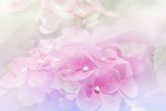 Πορφυρά λουλούδια hydrangea με το φίλτρο χρώματος Στοκ φωτογραφία με δικαίωμα ελεύθερης χρήσης
