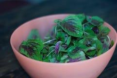 Πορφυρά φύλλα σπανακιού σε ένα κύπελλο Φρέσκο μίγμα του πράσινου και πορφυρού σπανακιού επιτραπέζιο στενό σε επάνω στοκ εικόνες με δικαίωμα ελεύθερης χρήσης