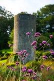 Πορφυρά wildflowers στον πράσινο τομέα στοκ εικόνες με δικαίωμα ελεύθερης χρήσης