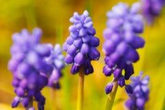 πορφυρές άγρια περιοχές λουλουδιών Στοκ φωτογραφίες με δικαίωμα ελεύθερης χρήσης