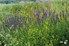 πορφυρές άγρια περιοχές λουλουδιών Άποψη του χωριού στην απόσταση Στοκ φωτογραφίες με δικαίωμα ελεύθερης χρήσης