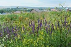 πορφυρές άγρια περιοχές λουλουδιών Άποψη του χωριού στην απόσταση Στοκ φωτογραφία με δικαίωμα ελεύθερης χρήσης