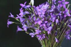 πορφυρές άγρια περιοχές λουλουδιών Στοκ Φωτογραφίες