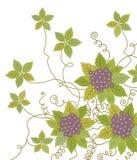πορφυρές άμπελοι λουλ&omicro Στοκ φωτογραφία με δικαίωμα ελεύθερης χρήσης