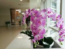 Πορφυρές ορχιδέες, ιώδεις ορχιδέες Η ορχιδέα είναι βασίλισσα των λουλουδιών στο Bu Στοκ εικόνες με δικαίωμα ελεύθερης χρήσης