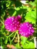 Πορφυρές τυπωμένες ύλες Καλών Τεχνών ταπετσαριών υποβάθρου λουλουδιών στοκ εικόνες