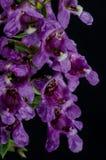 Πορφυρή δέσμη λουλουδιών στοκ φωτογραφίες με δικαίωμα ελεύθερης χρήσης