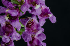 Πορφυρή δέσμη λουλουδιών στοκ φωτογραφία
