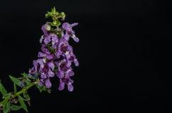 Πορφυρή δέσμη λουλουδιών στοκ εικόνες