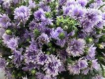 Πορφυρή ανθοδέσμη λουλουδιών Στοκ εικόνες με δικαίωμα ελεύθερης χρήσης