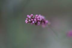 Πορφυρή λεπτομέρεια λουλουδιών Στοκ εικόνα με δικαίωμα ελεύθερης χρήσης