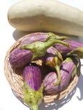 Πορφυρή και πράσινη κολοκύθα μελιτζάνας στοκ φωτογραφίες