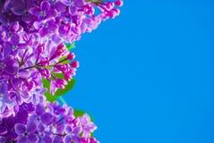 Πορφυρή πασχαλιά στο μπλε ουρανό Στοκ φωτογραφία με δικαίωμα ελεύθερης χρήσης