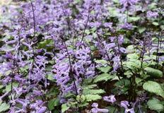 Πορφυρή σειρά λουλουδιών στοκ φωτογραφίες