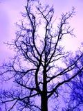 Πορφυρή σκιαγραφία των γυμνών δέντρων χωρίς φύλλα στοκ φωτογραφία