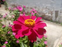 Πορφυρή τέχνη οδών λουλουδιών Στοκ Εικόνες