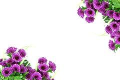 Πορφυρή ταπετσαρία λουλουδιών, υπόβαθρο γωνιών συνόρων, στο whi Στοκ Φωτογραφία