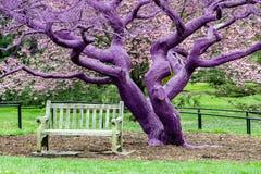 Πορφυρή χρωματισμένη βιολέτα λεπτομέρεια δέντρων στοκ φωτογραφία με δικαίωμα ελεύθερης χρήσης