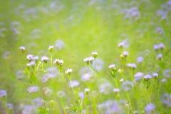 Πορφυρή χλόη λουλουδιών με το υπόβαθρο θαμπάδων φύσης στοκ εικόνες με δικαίωμα ελεύθερης χρήσης