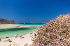 Πορφυρός θάμνος Balos Ελλάδα στοκ εικόνες