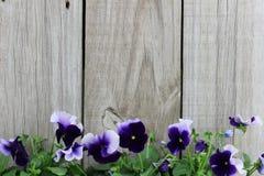 Πορφυρός ξύλινος φράκτης συνόρων λουλουδιών (pansies) στοκ φωτογραφία