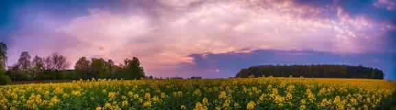 Πορφυρός ουρανός τομέων Rapseed Στοκ Φωτογραφίες