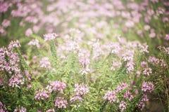 Πορφυρός τομέας λουλουδιών με το φως Στοκ Φωτογραφίες