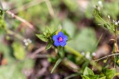 πορφυρός τροπικός φυτών Στοκ Εικόνες