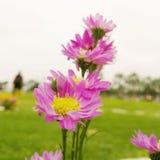 Πορφυρό αγαθό λουλουδιών Στοκ Φωτογραφία