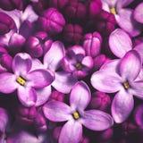 Πορφυρό ιώδες υπόβαθρο λουλουδιών στοκ εικόνες με δικαίωμα ελεύθερης χρήσης