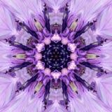 Πορφυρό κέντρο λουλουδιών Mandala Ομόκεντρο σχέδιο καλειδοσκόπιων Στοκ Εικόνες