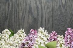 Πορφυρό και άσπρο ιώδες λουλούδι στην παλαιά δρύινη επιτραπέζια κορυφή στοκ φωτογραφίες με δικαίωμα ελεύθερης χρήσης
