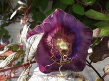 Πορφυρό κουδούνι-λουλούδι από το μέτωπο Στοκ Φωτογραφίες