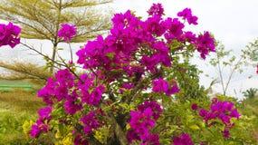 Πορφυρό λουλούδι εγγράφου Στοκ φωτογραφίες με δικαίωμα ελεύθερης χρήσης