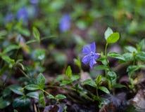 Πορφυρό λουλούδι στα ξύλα στοκ φωτογραφίες με δικαίωμα ελεύθερης χρήσης