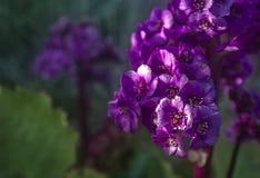 Πορφυρό λουλούδι στον ήλιο θερινής ομορφιάς στοκ εικόνες