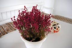 Πορφυρό λουλούδι στο άσπρο δοχείο και κολοκύθα με το ευτυχές πρόσωπο Στοκ Φωτογραφίες