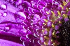 Πορφυρό μακρο λουλούδι Στοκ Εικόνες