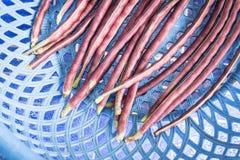 Πορφυρό μακρύ φασόλι Στοκ εικόνες με δικαίωμα ελεύθερης χρήσης
