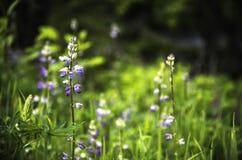 Πορφυρό μπάλωμα λουλουδιών στοκ φωτογραφία με δικαίωμα ελεύθερης χρήσης