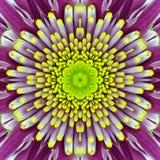 Πορφυρό ομόκεντρο κέντρο λουλουδιών. Kaleidoscopic σχέδιο Mandala Στοκ Εικόνα