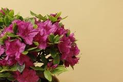 Πορφυρό λουλούδι πριν από το κιτρινωπό υπόβαθρο στοκ εικόνα